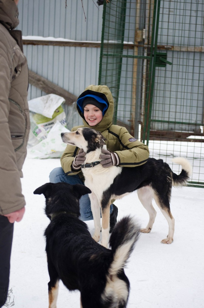 10.12.2018 г. Дюжина собак обрели дом в минувшие выходные